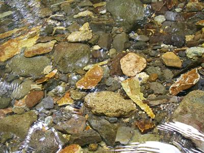 透き通る川底
